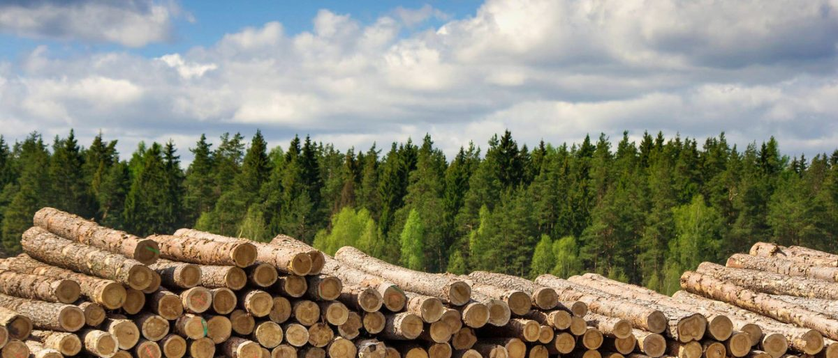 Ссылка на: Продукция лесхоза